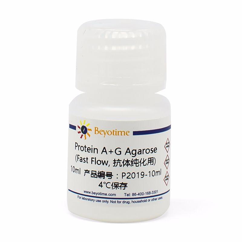 Protein A+G Agarose (Fast Flow, 抗体纯化用)