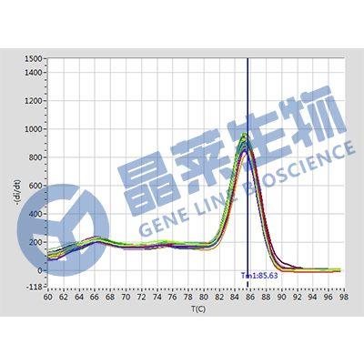 荧光定量PCR,qPCR