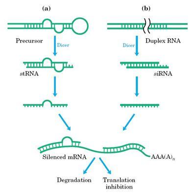 三条siRNA干扰片段合成,三保一