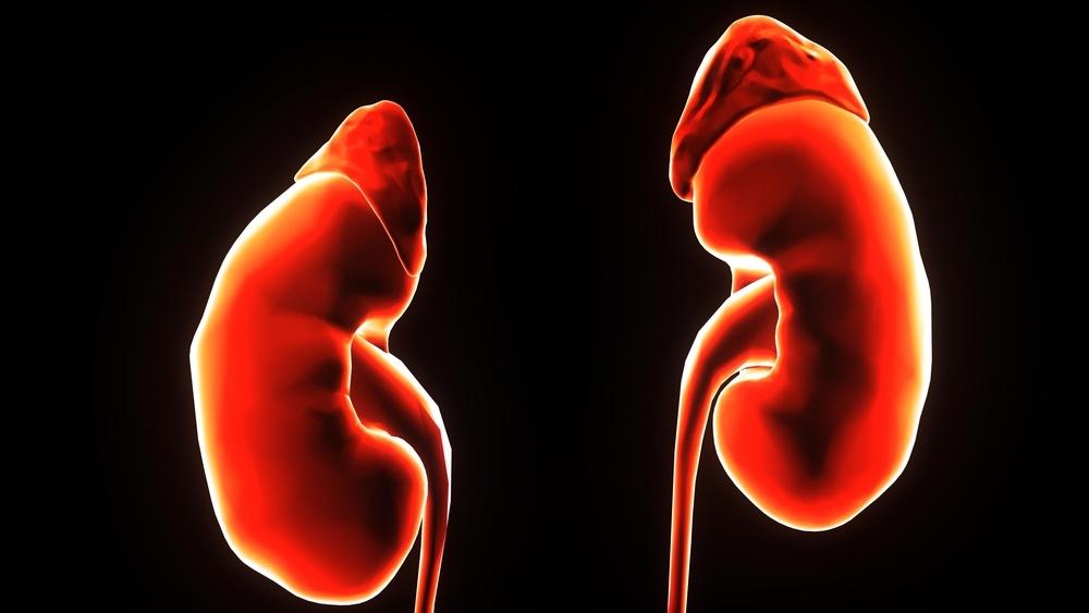 独立完成即穿型人工血管置入,大大改善透析患者的透析质量
