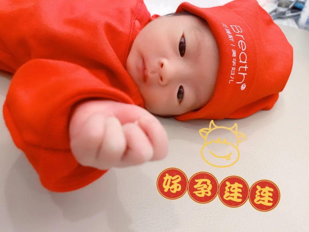 杭州美华第一批「牛宝宝」 闪亮登场!牛劲十足,快沾喜气