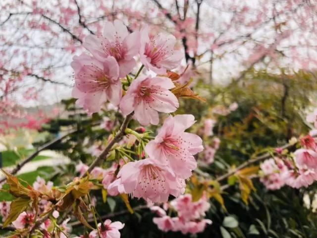 武汉大学人民医院:落日真美!人间值得!