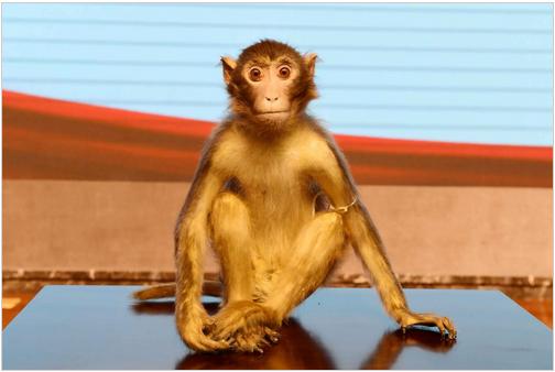 西安交大一附院世界首个恒河猴甲亢模型运抵西安