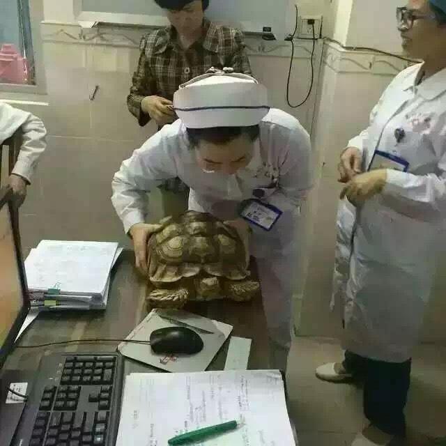 乌龟到医院排队看病  被病人投诉怎么办?