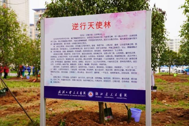 2801 位「贵人」组成的最大援汉医疗天团,造了一片「逆行天使」林