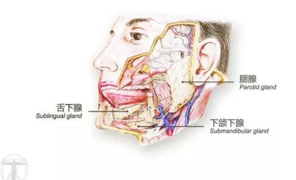 其实,画图是每一个医生的必修课